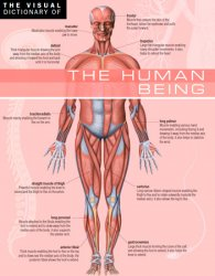 The Visual Dictionary of The Human Being: The Human Being